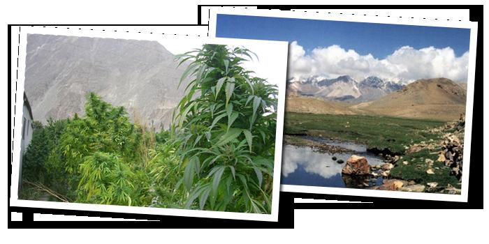 kush-landscapes-polaroids